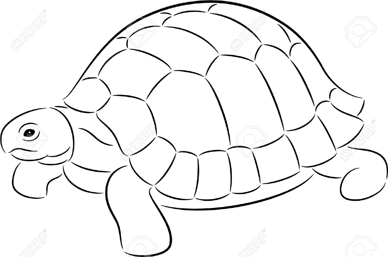 Illustration Of A Tortoise Contour, Isolated Royalty Free Cliparts.
