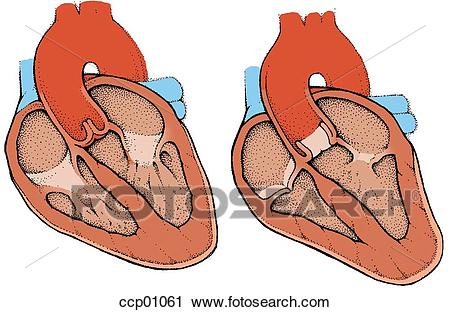 Heart, contraction Clip Art.