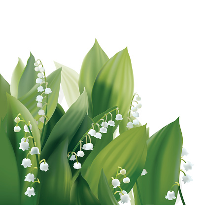 Lily Of The Valley Colors Background Clip Art, Vector Images.
