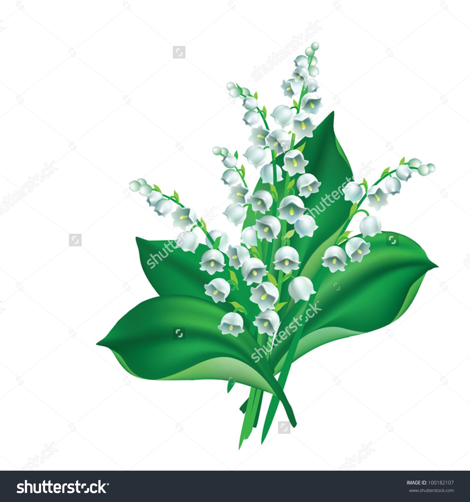 Eps 8/ Flowers And Leaves Of Lily Of The Valley {Convallaria.