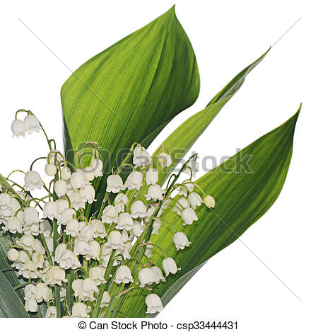 Stock Photos of Lily of the Valley.