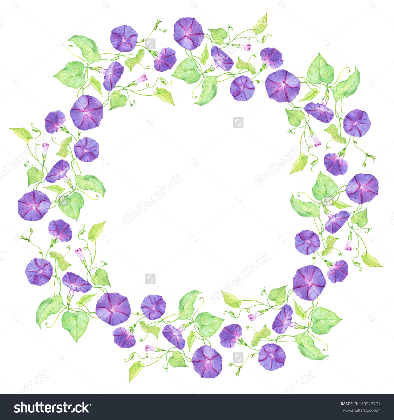 Painted Watercolor Wreath Of Violet Convolvulus Stock Photo.