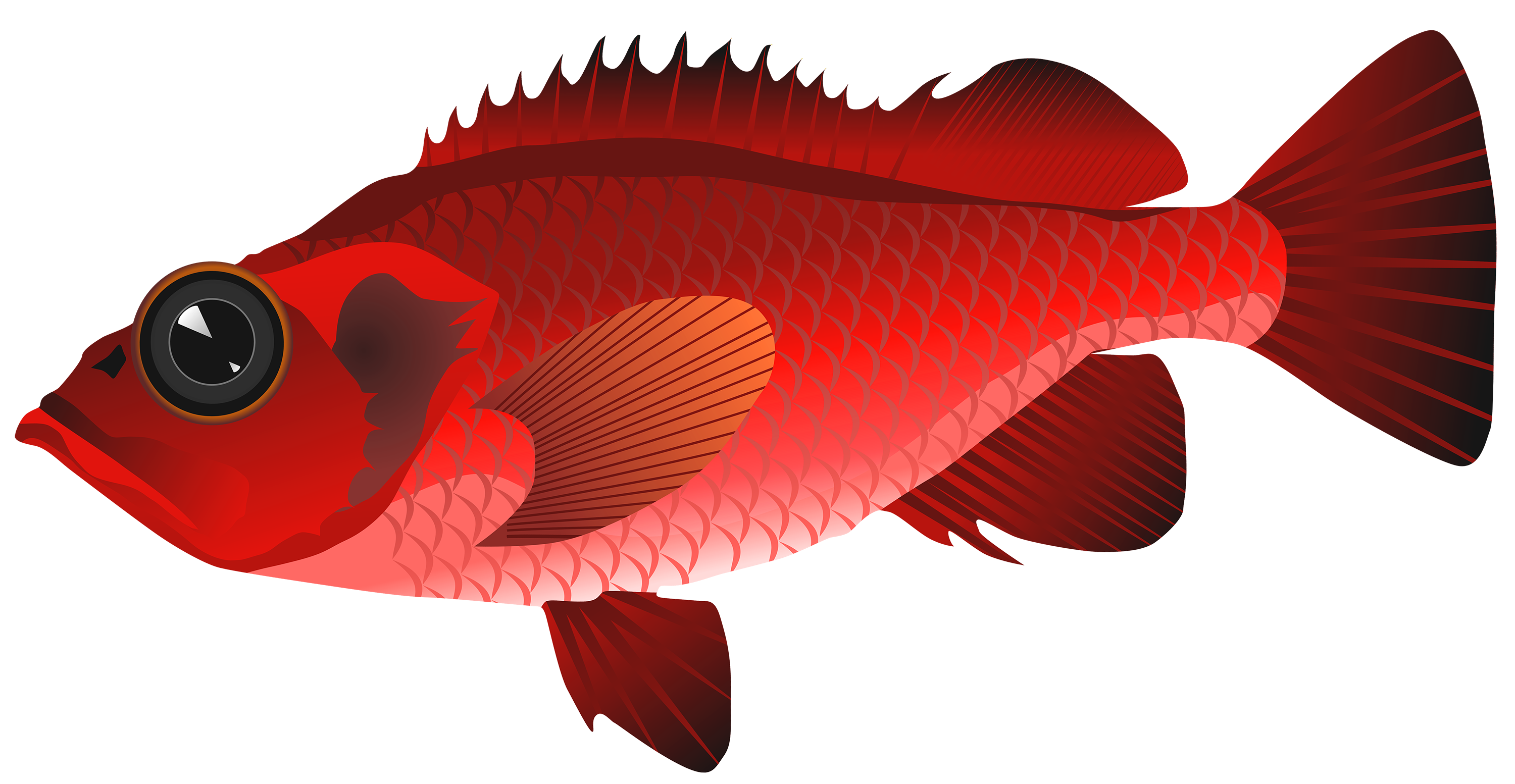 Red Fish PNG Clipart.