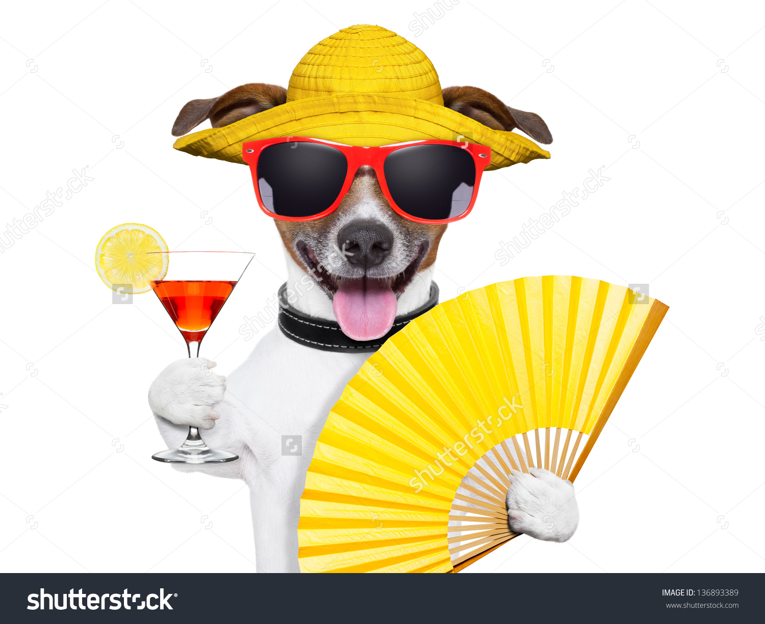 Summer Cocktail Dog Cooling Off With Hand Fan Stock Photo.