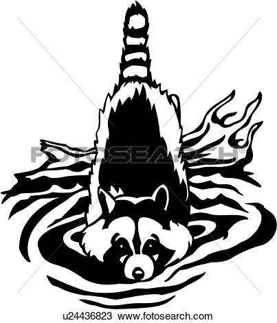 Clipart of , animal, coon, raccoon, u24436823.