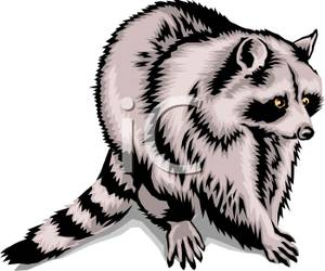 Coon Clipart.