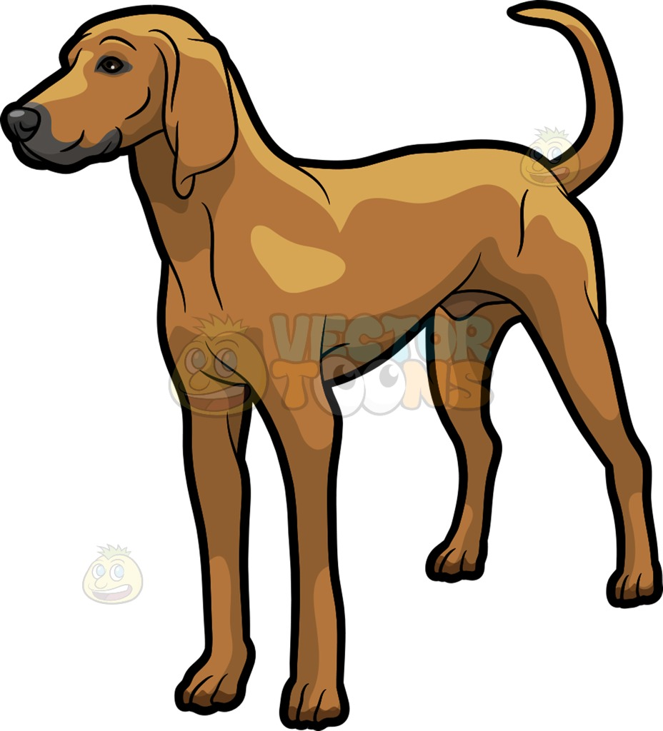 A Tough Looking Coonhound Pet Dog Cartoon Clipart.