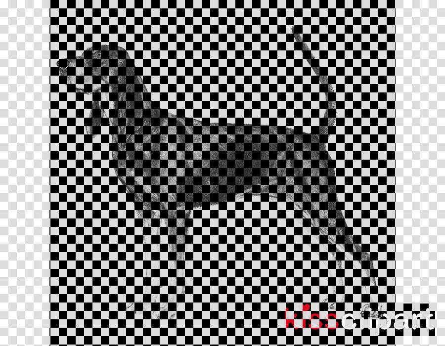 dog english foxhound schweizer laufhund hound coonhound.