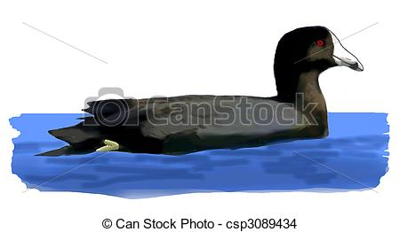 Coot Stock Illustrations. 18 Coot clip art images and royalty free.