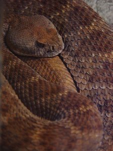 Snake Photo Clipart Image.