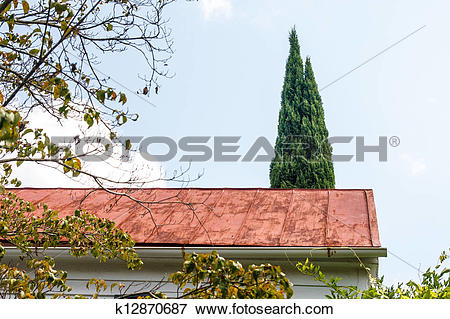Picture of Copper Roof and Cypress Tree k12870687.