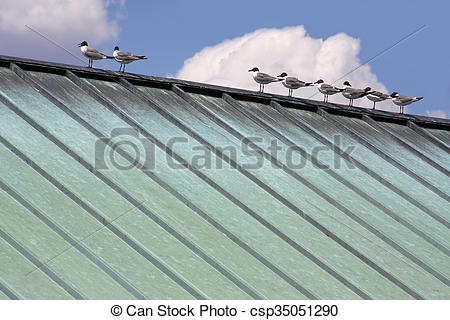 Stock Photographs of birds on copper roof.