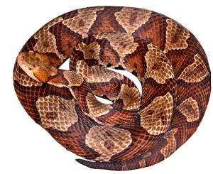 Snake Clip Art Download.
