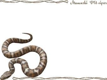 Snake) Mamushi Pit.