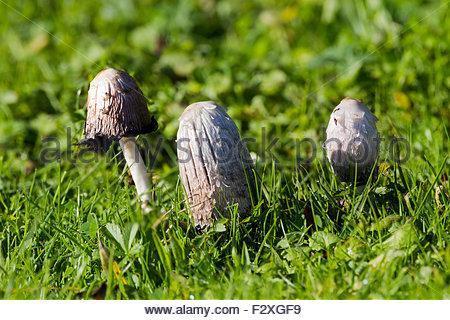 Fungi Stock Photos & Fungi Stock Images.