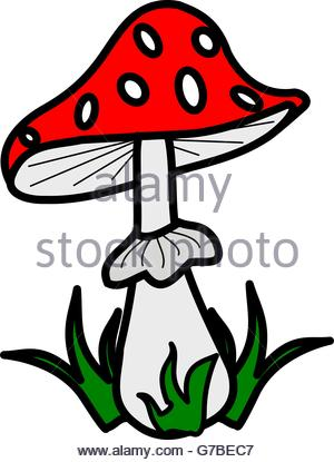 White Spotted Toadstool Stock Photos & White Spotted Toadstool.