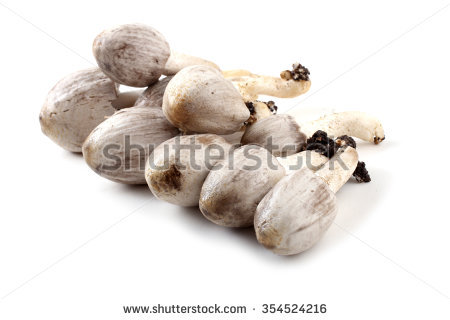 Coprinopsis Atramentaria Stock Photos, Images, & Pictures.