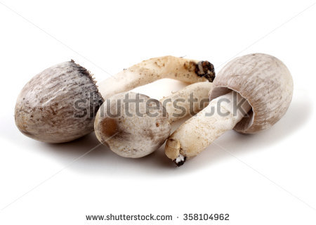 Mushrooms Stock Photo 24489553.
