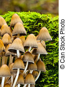 Stock Images of Fungi.