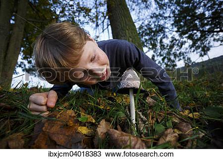 "Stock Photo of ""Boy looking at mushroom, shaggy ink cap (Coprinus."