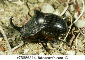 Scarab Stock Photos and Images. 2,419 scarab pictures and royalty.