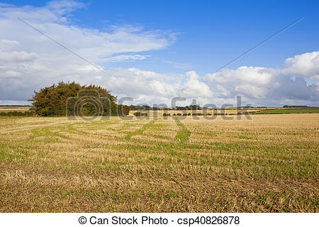Picture of autumnal pine copse.