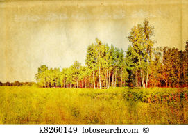 Copse Illustrations and Clip Art. 29 copse royalty free.
