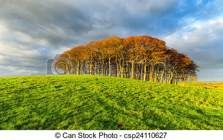 Stock Photo of Small Copse of Trees on a Hill.