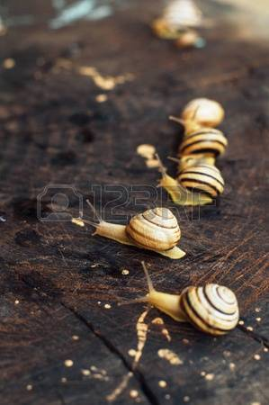 Snails Garden Images, Stock Pictures, Royalty Free Snails Garden.