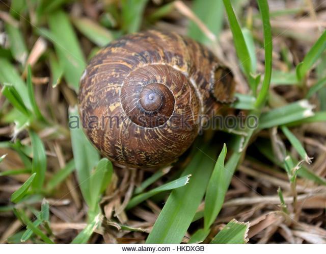 Hiding Snail Stock Photos & Hiding Snail Stock Images.