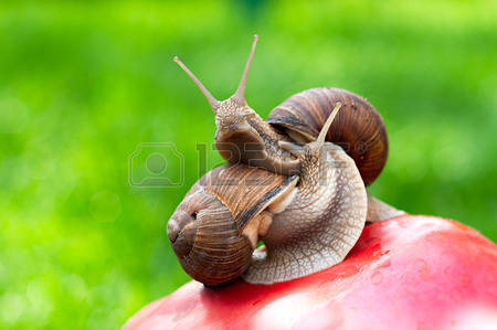 Snails In The Garden Images, Stock Pictures, Royalty Free Snails.