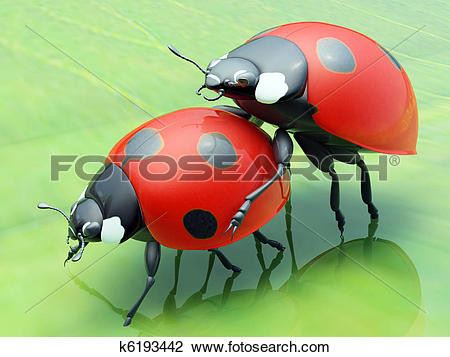 Clip Art of Ladybugs copulate on a green leaf k6193442.