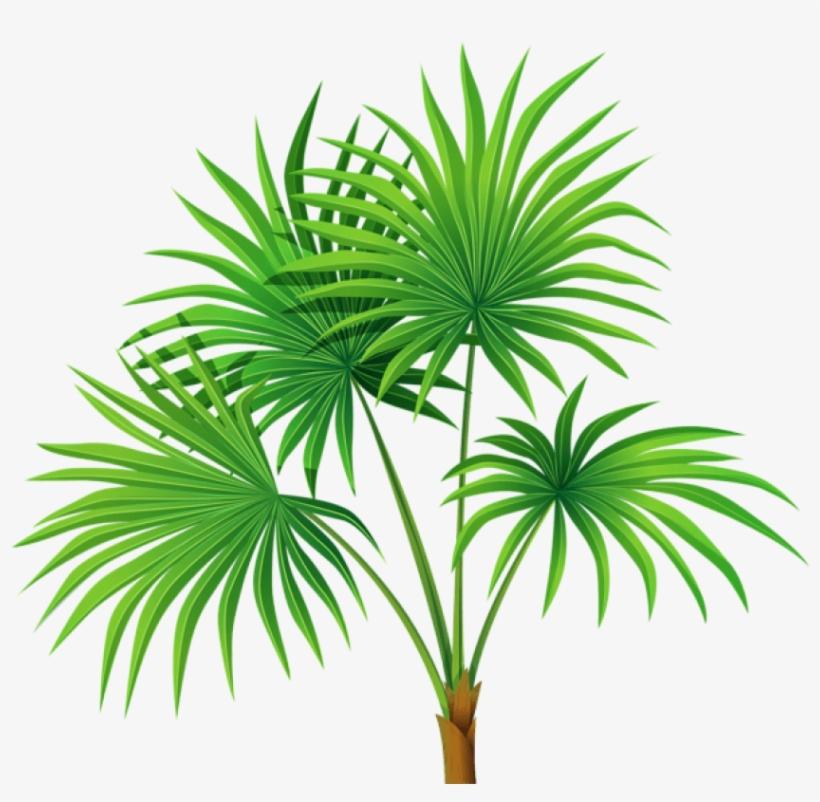 Árvores Coqueiro 6 Png.