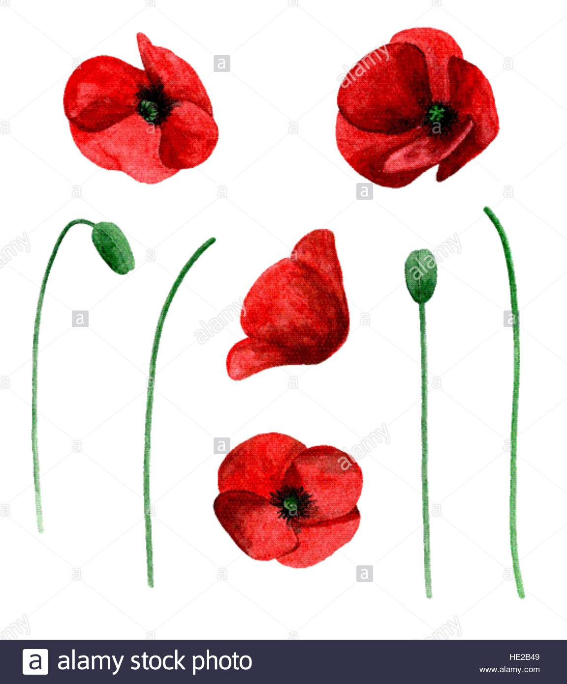 Watercolor poppy vector clip art. Red flowers clipart Stock Vector.