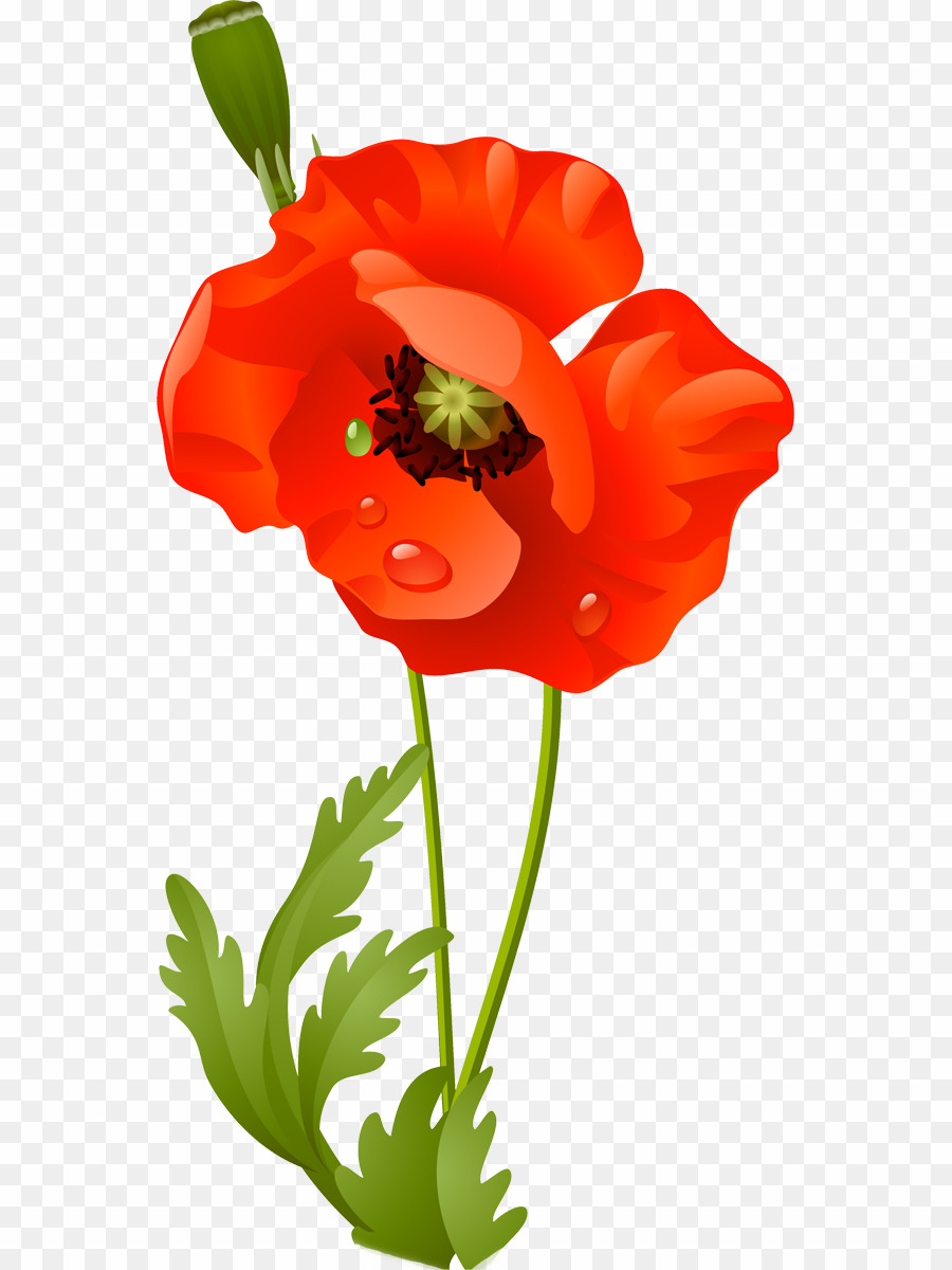 Flower PNG Poppy Clipart download.