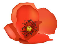 Coquelicot Clipart And Illustrations.