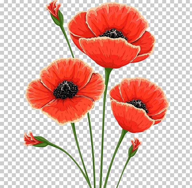 Common Poppy Flower Remembrance Poppy Poppies PNG, Clipart, Common.