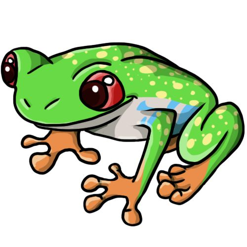 Coqui Frog Drawing.