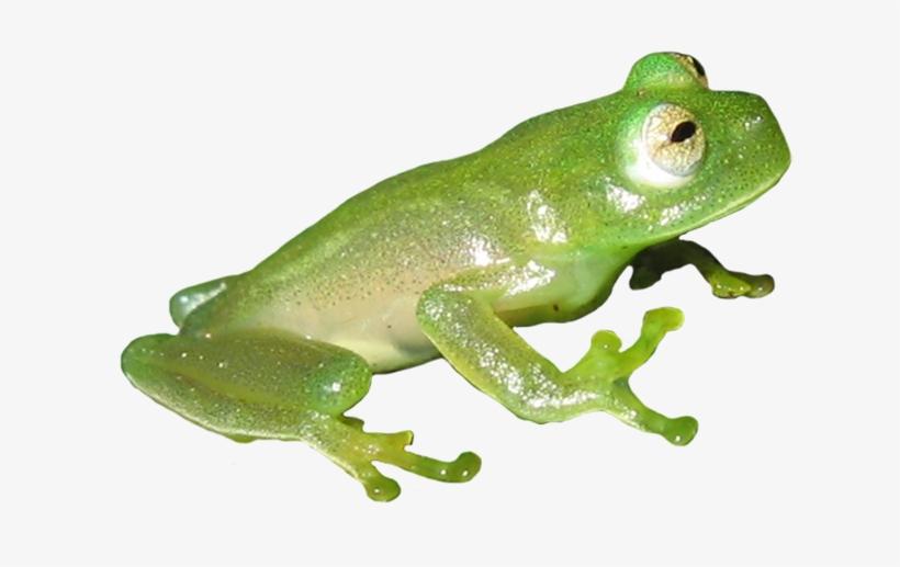 Frog Clip Art Vector Freeuse Download.