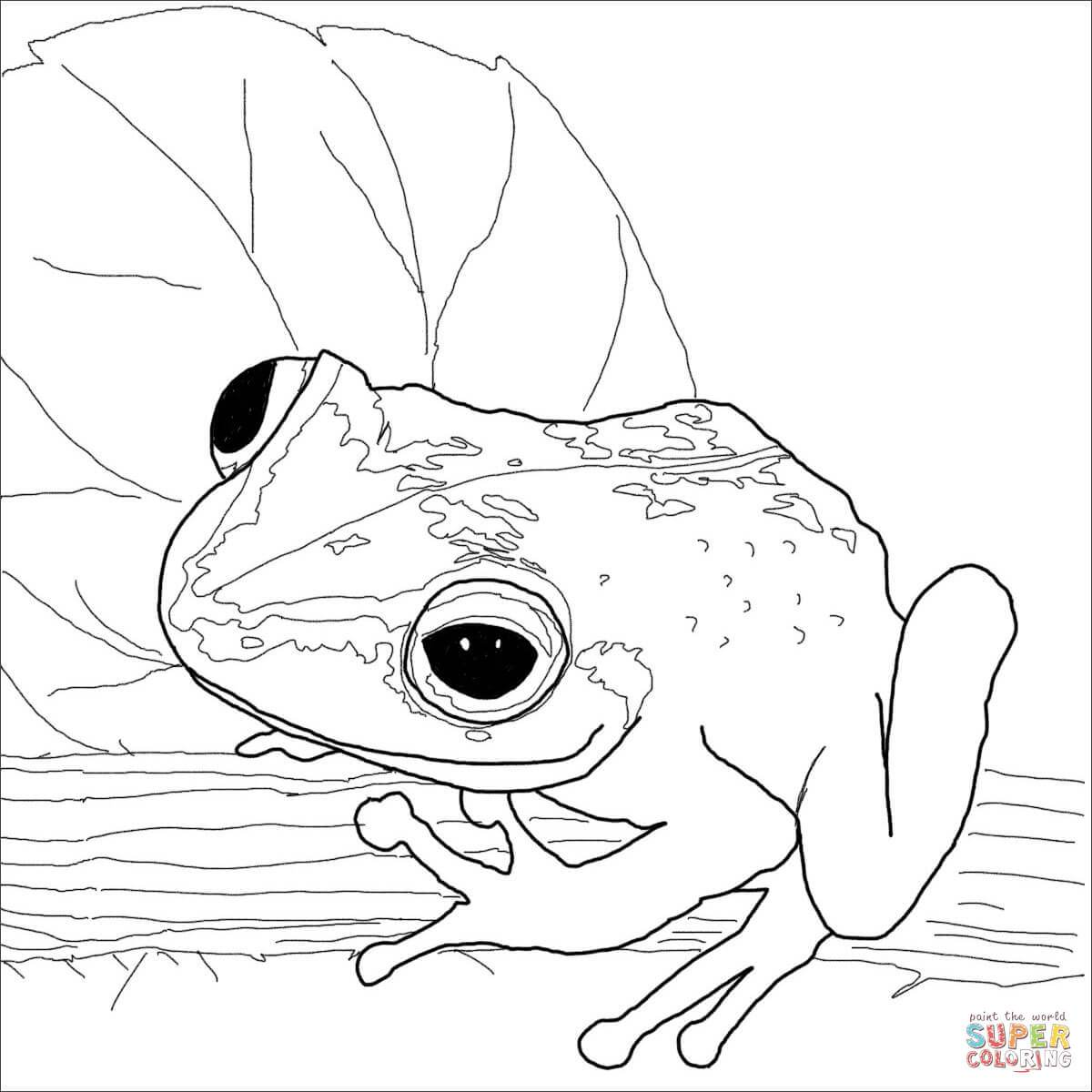 Coqui Coloring Page.