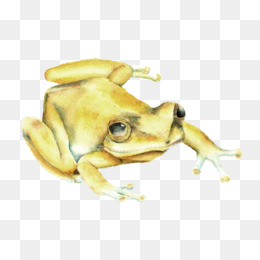 Coqui PNG and Coqui Transparent Clipart Free Download..