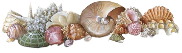 Coquillage png 7 » PNG Image.