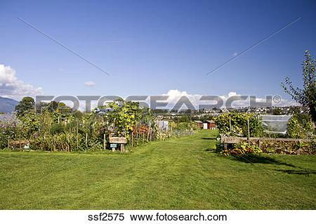 Stock Image of Rows of garden plots at suburban Community Garden.