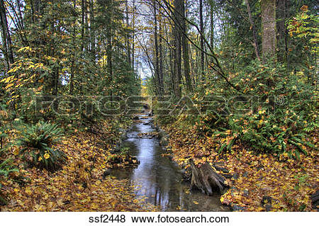 Pictures of Hyde Creek Nature Park in Autumn, Port Coquitlam, BC.