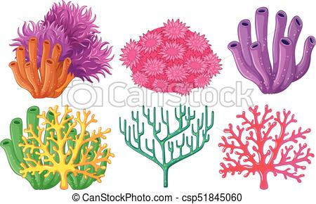 Different types of coral reef.