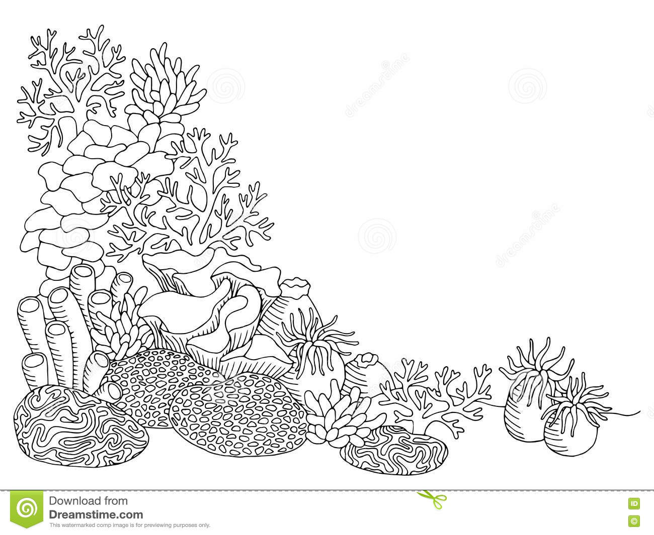 1463 Coral free clipart.