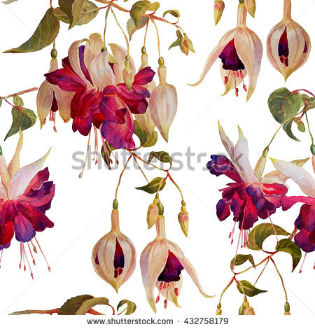 Fuchsia Stock Photos, Royalty.