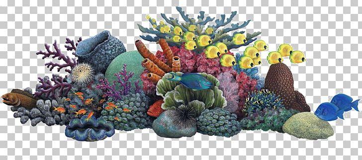 Coral Reef Sea Ocean PNG, Clipart, Aquarium, Aquarium Decor.