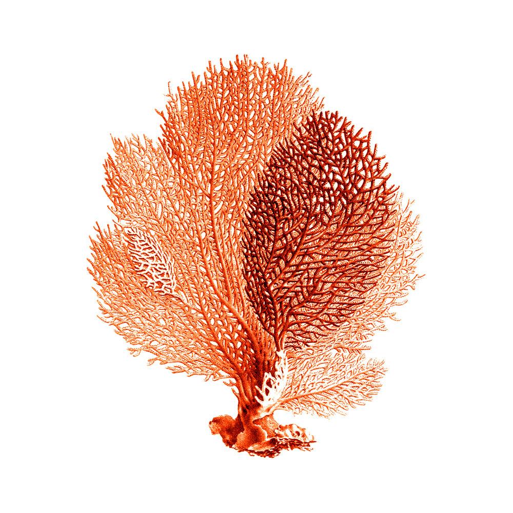 Orange coral clipart.