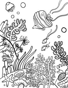 10 Best Coral reef drawing images in 2014.